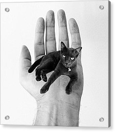 A Cat In The Hand Is Worth Acrylic Print