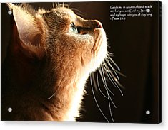 A Cat Prayer Acrylic Print by Wendi Matson