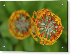 A Close Up View Of Flowering Stalks Acrylic Print by Darlyne A. Murawski