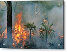A Controlled Fire Helps Prevent Acrylic Print by Randy Olson