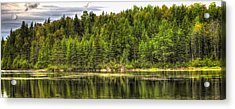 A Day In The Forest Of Maine Acrylic Print by Gary Smith
