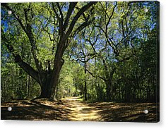 A Dirt Road Through A Forest Passes Acrylic Print by Raymond Gehman