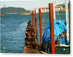 A Dock Of Sea Lions Acrylic Print by Jeff Swan