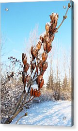 A Dose Of Winter Acrylic Print