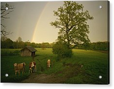 A Double Rainbow Arcs Over A Field Acrylic Print by Carsten Peter