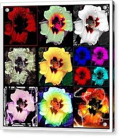 A Dozen Blooms Acrylic Print