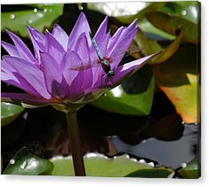 A Dragonfly Guarding His Water Lily Acrylic Print