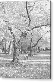 A Fall Day In Black And White Acrylic Print