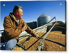 A Farmer Watches As His Corn Is Augered Acrylic Print by Joel Sartore