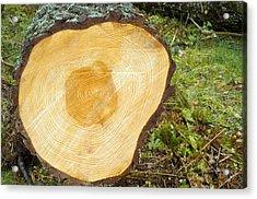 A Felled Tree Trunk Acrylic Print by Duncan Shaw