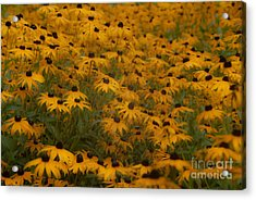 A Field Full Of Flowers Acrylic Print by Michael Rucci