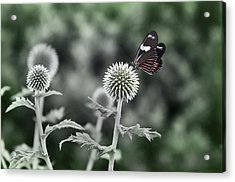 A Flight Of Fancy Acrylic Print