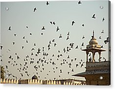 A Flock Of Pigeons Crowding One Of The Structures On Top Of The Red Fort Acrylic Print by Ashish Agarwal