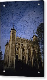 A Flock Of Starlings In Flight Acrylic Print by Jonathan Blair