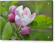 A Flower In The Wild Acrylic Print by Artie Wallace
