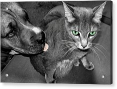 A Forbidden Love  Acrylic Print by Juliana  Blessington