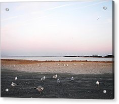 Acrylic Print featuring the photograph A Gathering On Rehoboth Bay by Pamela Hyde Wilson