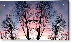 A Gift Acrylic Print by Amy Sorrell