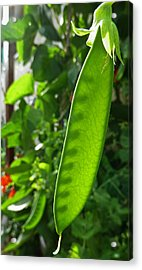 Acrylic Print featuring the photograph A Green Womb by Steve Taylor