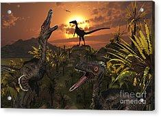 A Group Of Feathered Carnivorous Acrylic Print by Mark Stevenson