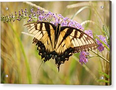 Acrylic Print featuring the photograph A Hard Flight by Kathy Gibbons