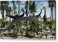 A Herd Of Diplodocus Dinosaurs Feeding Acrylic Print by Mark Stevenson