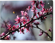 Acrylic Print featuring the photograph A Hint Of Spring  by Amy Gallagher
