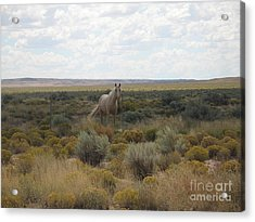 A Horse In The Desert Acrylic Print by Michaline  Bak