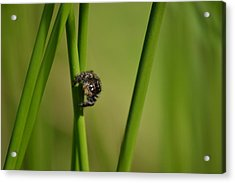Acrylic Print featuring the photograph A Jumper In The Grass by JD Grimes