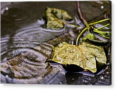 A Leaf In The Rain Acrylic Print