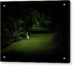 A Light In The Forest Acrylic Print by Mark Andrew Thomas