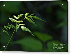 A Light In The Forest Acrylic Print by Sean Griffin