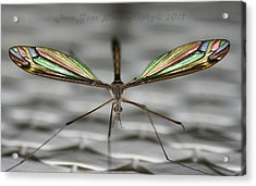 A Little Bling For The Wings Acrylic Print by Ted Albert