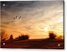 A Little Peace Acrylic Print by Tom York Images