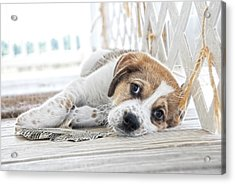 A Little Rest Acrylic Print by Tilly Williams