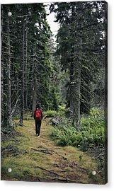 A Lone Hiker Enjoys A Wooded Trail Acrylic Print by Tim Laman