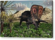 A Lone Torosaurus Dinosaur Feeding Acrylic Print by Mark Stevenson