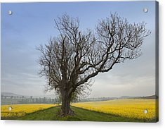 A Lone Tree On The Edge Of A Yellow Acrylic Print by John Short