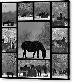 A Long Winter Acrylic Print by Christy Leigh
