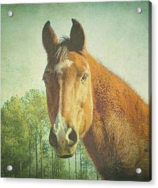 Acrylic Print featuring the photograph A Loving Soul by Robin Dickinson