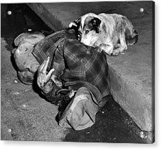 A Loyal Chicago Dog Named Queenie Acrylic Print by Everett