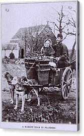 A Market Team In Flanders. Two Dogs Acrylic Print by Everett