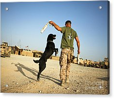 A Military Working Dog Handler Conducts Acrylic Print by Stocktrek Images