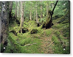 A Mossy Woodland View On Queen Acrylic Print by Bill Curtsinger