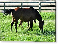 A Mother And Little One Acrylic Print by Bill Cannon