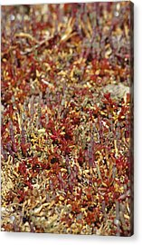 A Myriad Of Bright Red And Orange Acrylic Print by Jason Edwards