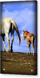 A New Life Acrylic Print by Judy Garrett