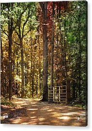 A New Season Acrylic Print by Jai Johnson