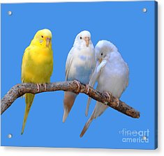 A Pair And A Spare Acrylic Print by DiDi Higginbotham