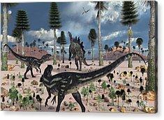 A Pair Of Allosaurus Dinosaurs Confront Acrylic Print by Mark Stevenson